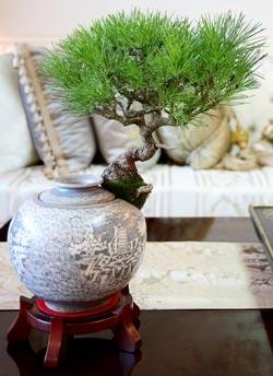 청자·백자에서 자라는 소나무…인테리어·공기정화 효과
