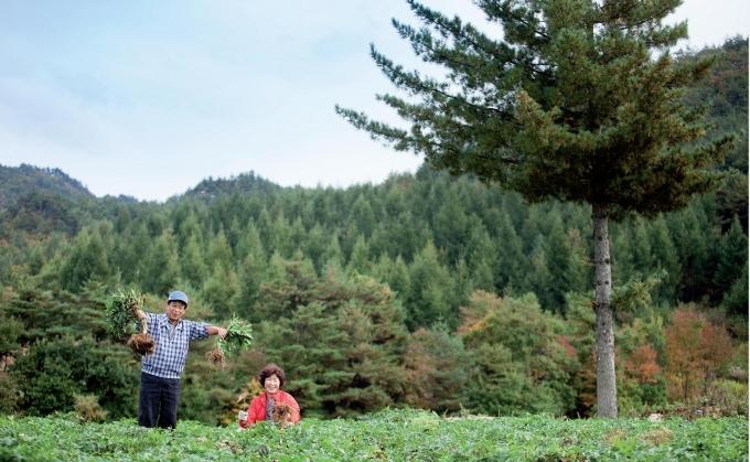 귀농사례…약초 재배로 연봉 1억원에 도전