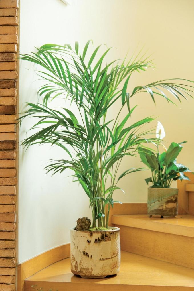 겨울철 실내 습도 높여주는관엽식물