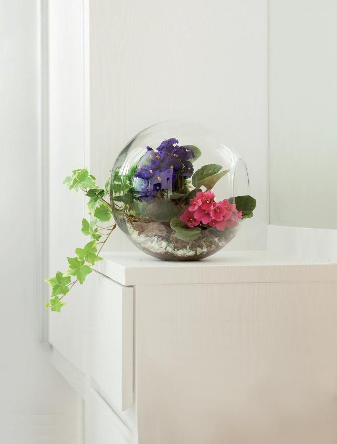 상큼한 멋이 듬뿍…유리 용기에 화초 키우기