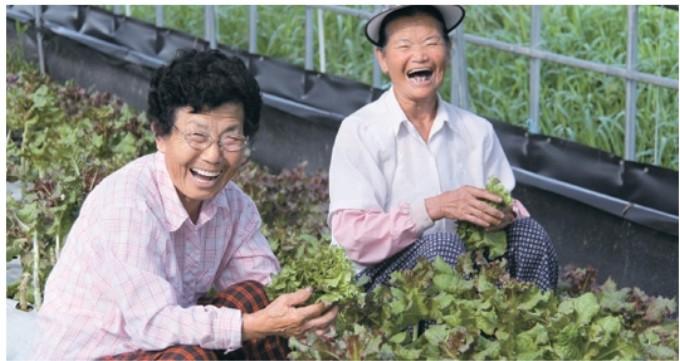 도시서 온 귀농인, 농사 힘든 노인… 힘 모으니 살맛 나네요